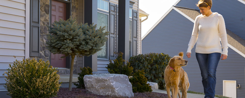 Golden Retriever enjoying his front yard with Invisible Fence Brand Solutions