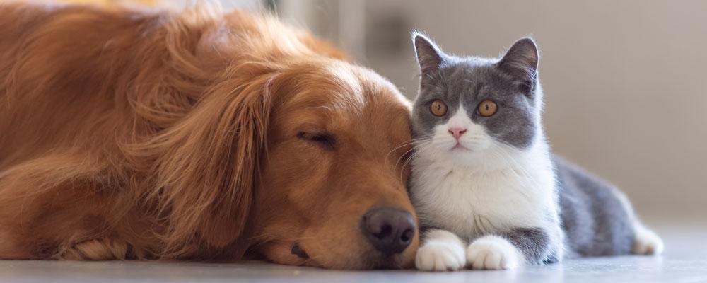 dog sleeping next to cat