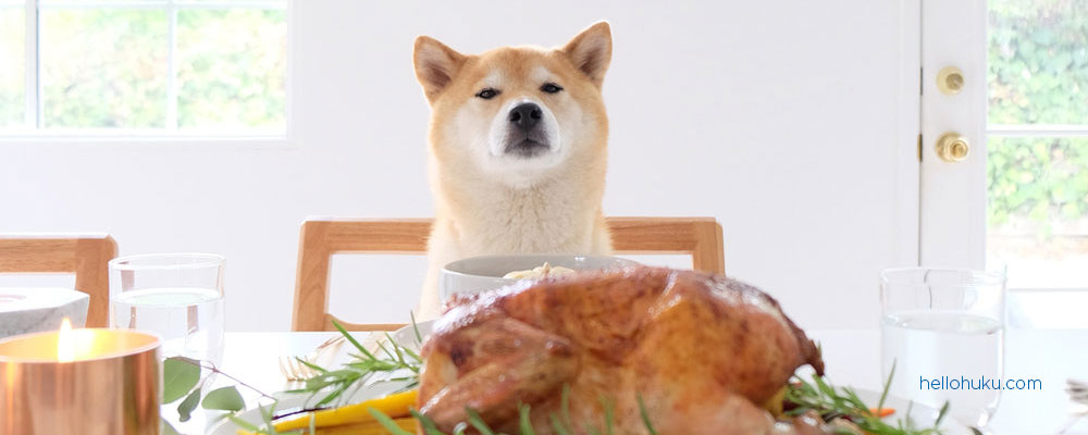 dog sitting next to turkey during thanksgiving