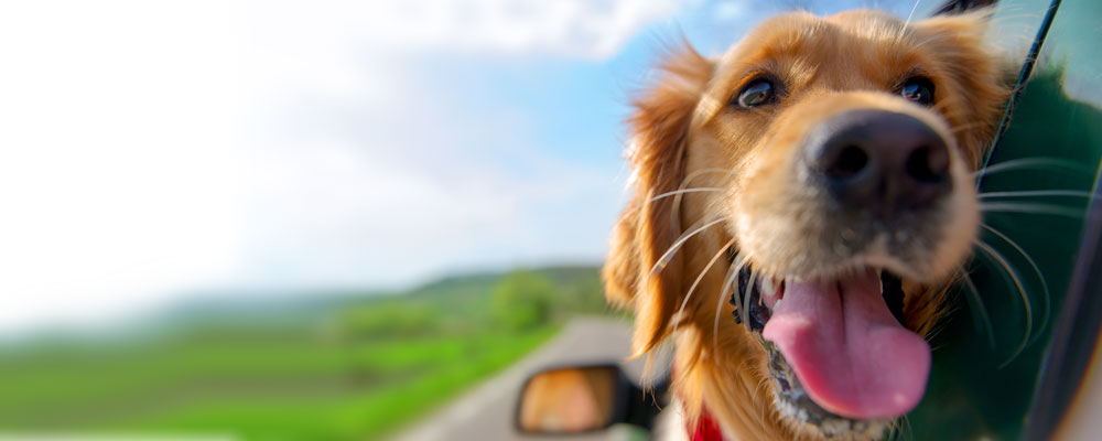 dog with head out of window on vacation