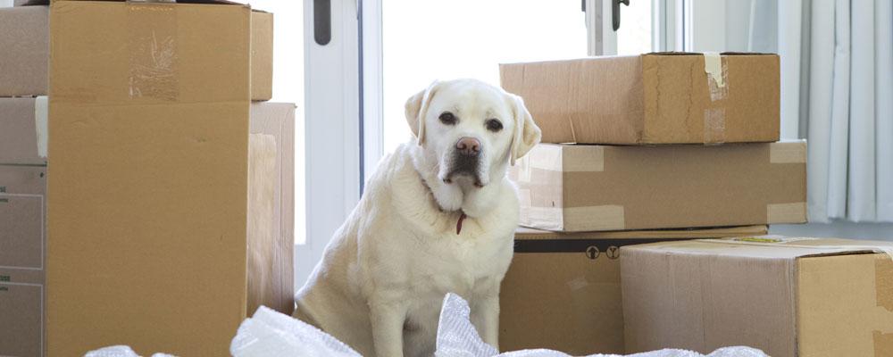 dog sitting next to boxes