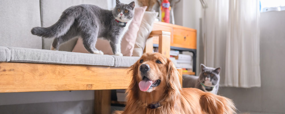 Wondering how to prevent pet shedding? Invisible Fence® Brand has tips on how to keep unwanted cat and dog hair off your bed, clothes, and furniture.