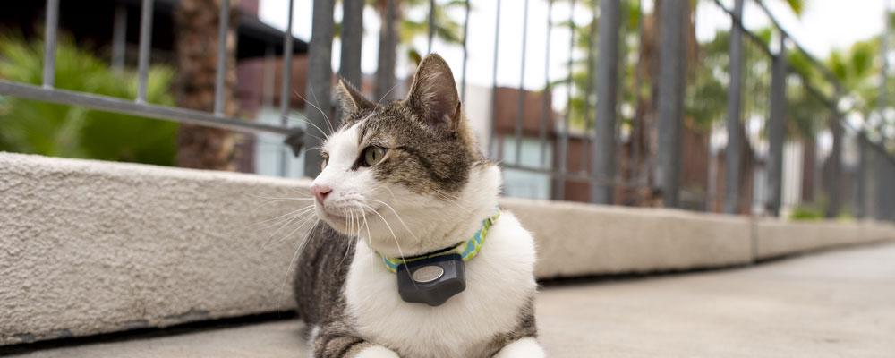 Outdoor Cat Sitting Outside Safe Outside & Inside